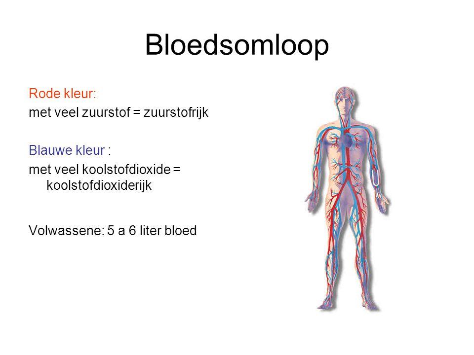 Bloedsomloop Rode kleur: met veel zuurstof = zuurstofrijk Blauwe kleur : met veel koolstofdioxide = koolstofdioxiderijk Volwassene: 5 a 6 liter bloed