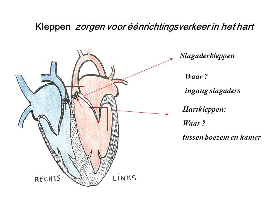 Kleppen zorgen voor éénrichtingsverkeer in het hart Hartkleppen: Waar ? tussen boezem en kamer Slagaderkleppen Waar ? ingang slagaders