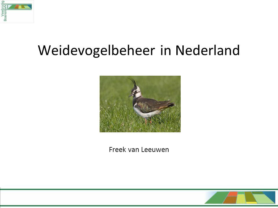 Weidevogelbeheer in Nederland Freek van Leeuwen