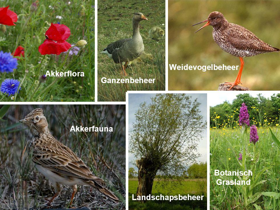 Weidevogelbeheer Landschapsbeheer Ganzenbeheer Botanisch Grasland Akkerfauna Akkerflora