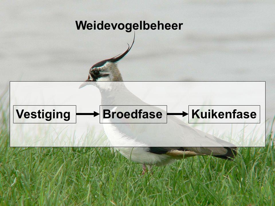 Weidevogelbeheer BroedfaseKuikenfaseVestiging