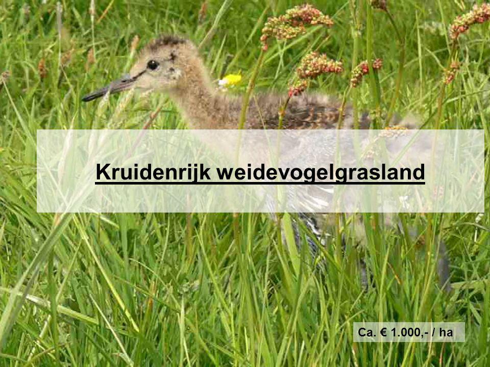 Kruidenrijk weidevogelgrasland Ca. € 1.000,- / ha