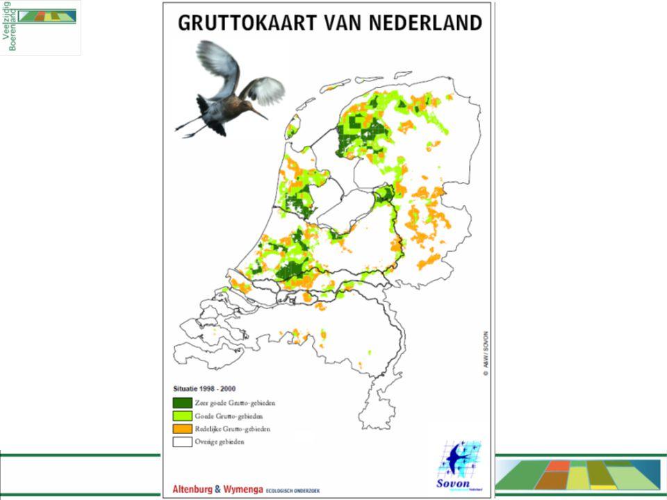 Enkele thema's •Nederland als belangrijk broedgebied •Verenigbaarheid met landbouw •Heel veel onderzoek, heel veel commissies •Vrijwilligers •Predatie •Inrichting van gebieden