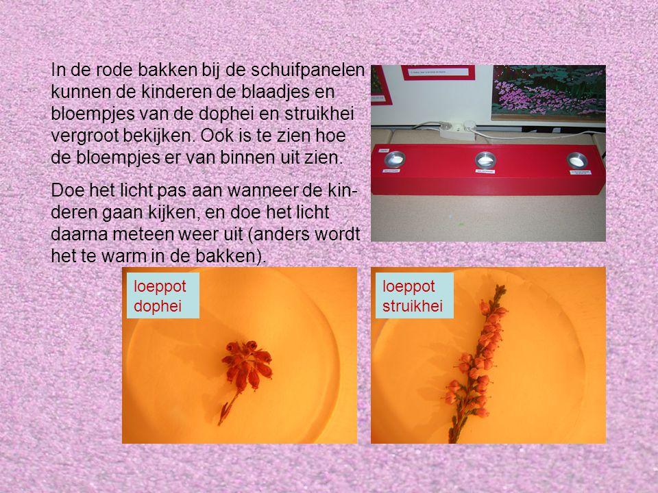 In de rode bakken bij de schuifpanelen kunnen de kinderen de blaadjes en bloempjes van de dophei en struikhei vergroot bekijken. Ook is te zien hoe de