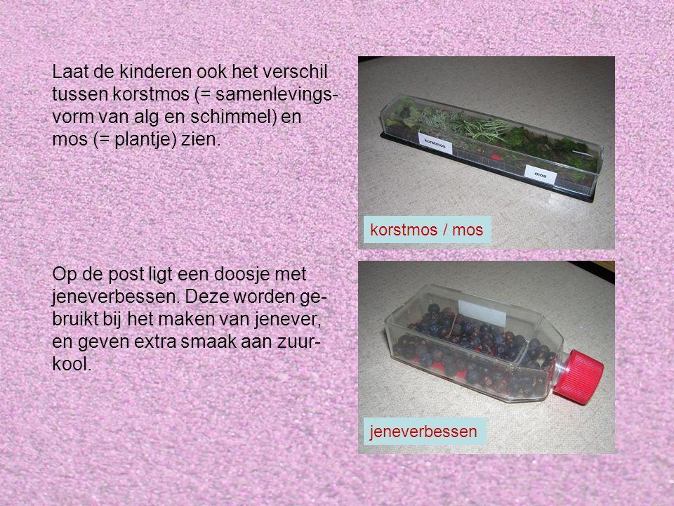 Laat de kinderen ook het verschil tussen korstmos (= samenlevings- vorm van alg en schimmel) en mos (= plantje) zien. Op de post ligt een doosje met j