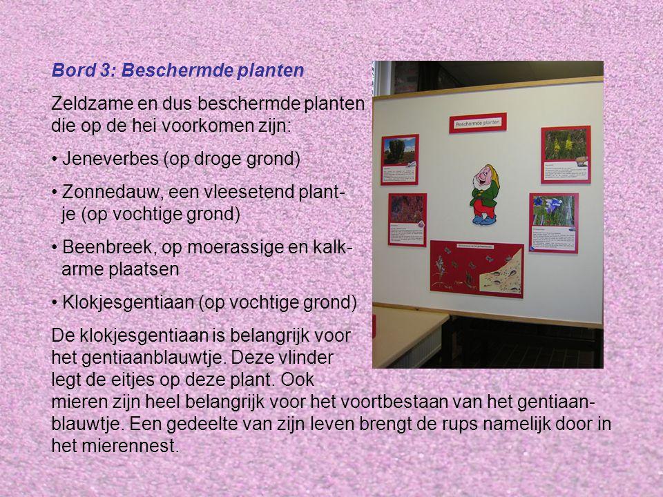 Bord 3: Beschermde planten Zeldzame en dus beschermde planten die op de hei voorkomen zijn: • Jeneverbes (op droge grond) • Zonnedauw, een vleesetend