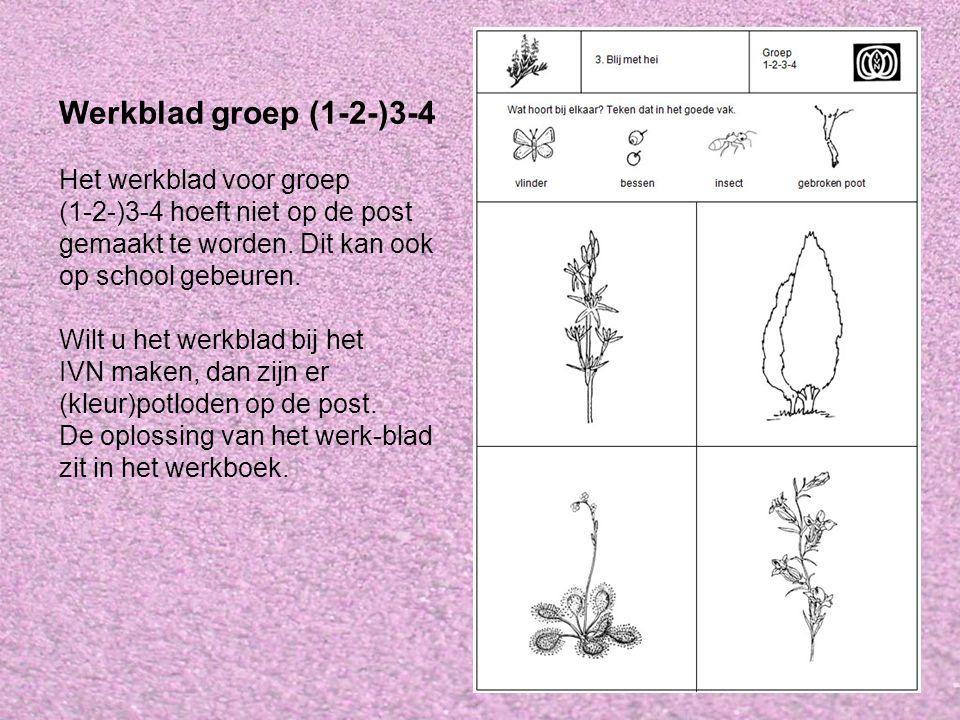 Werkblad groep (1-2-)3-4 Het werkblad voor groep (1-2-)3-4 hoeft niet op de post gemaakt te worden. Dit kan ook op school gebeuren. Wilt u het werkbla