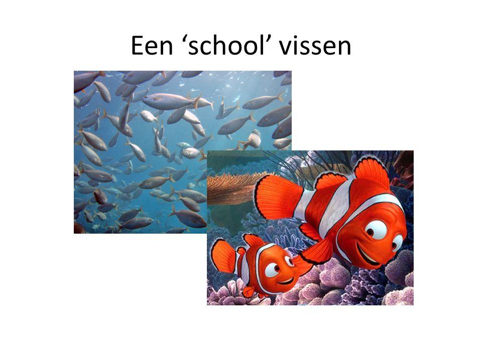 Een 'school' vissen