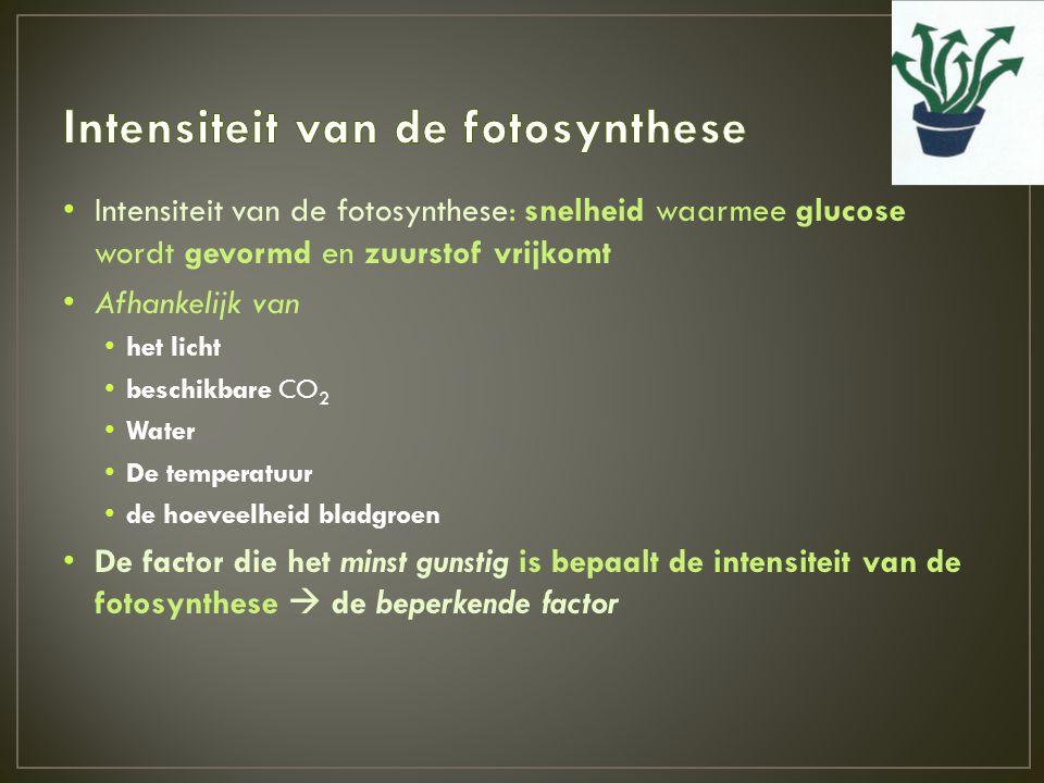 • Intensiteit van de fotosynthese: snelheid waarmee glucose wordt gevormd en zuurstof vrijkomt • Afhankelijk van • het licht • beschikbare CO 2 • Wate