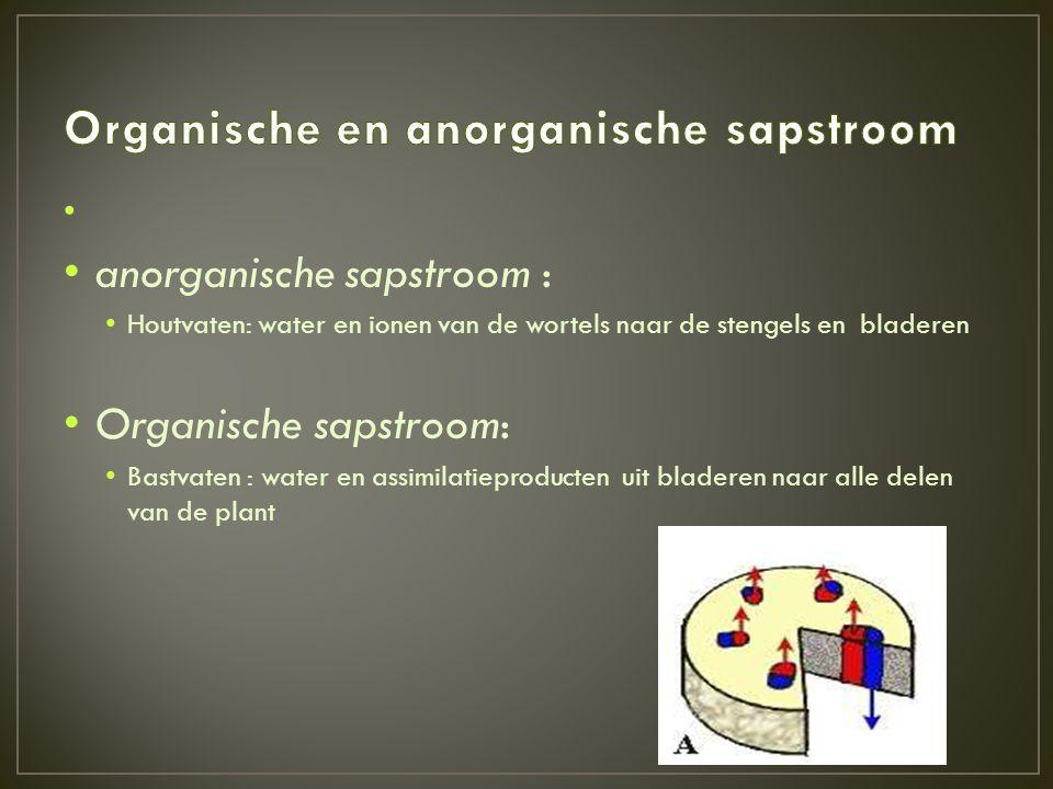 • • anorganische sapstroom : • Houtvaten: water en ionen van de wortels naar de stengels en bladeren • Organische sapstroom: • Bastvaten : water en as