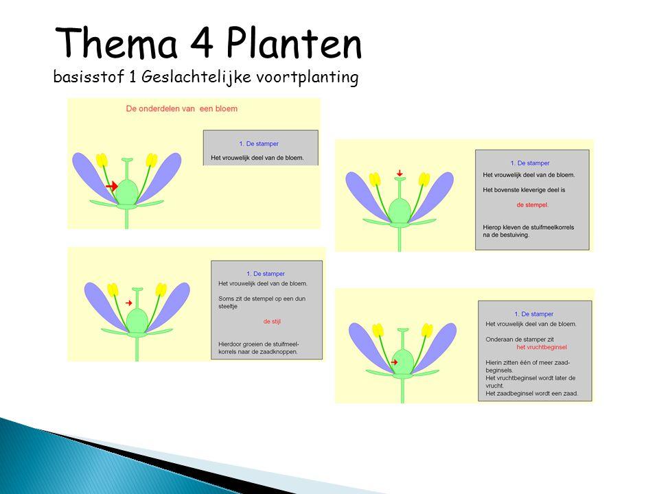 Thema 4 Planten basisstof 3 Opname, afgifte, transport en opslag van stoffen http://www.schooltv.nl/beeldbank/clip/20030623_aardappelen02