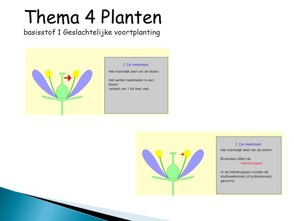 Thema 4 Planten basisstof 2 Ontkieming, groei en ontwikkeling