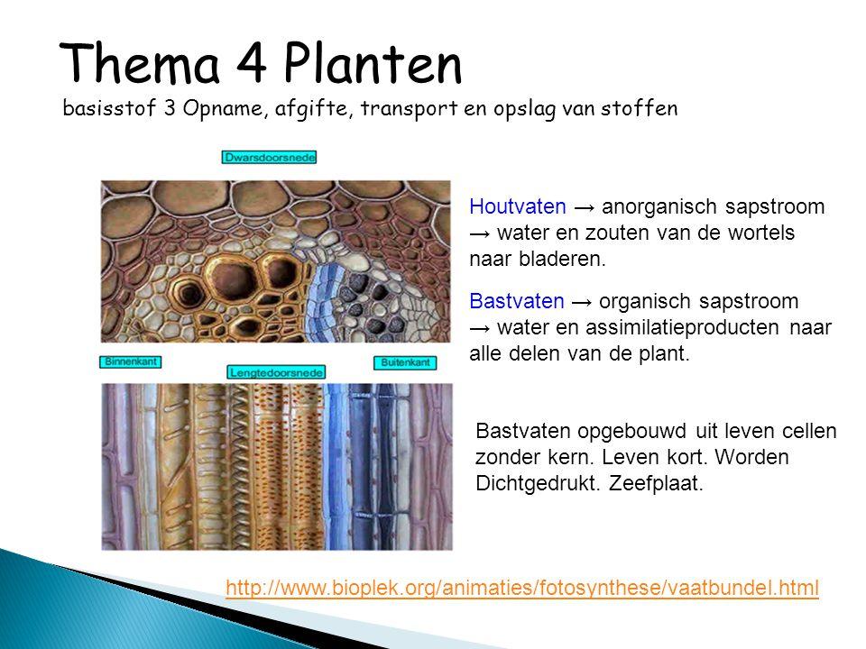 http://www.bioplek.org/animaties/fotosynthese/vaatbundel.html Bastvaten → organisch sapstroom → water en assimilatieproducten naar alle delen van de p