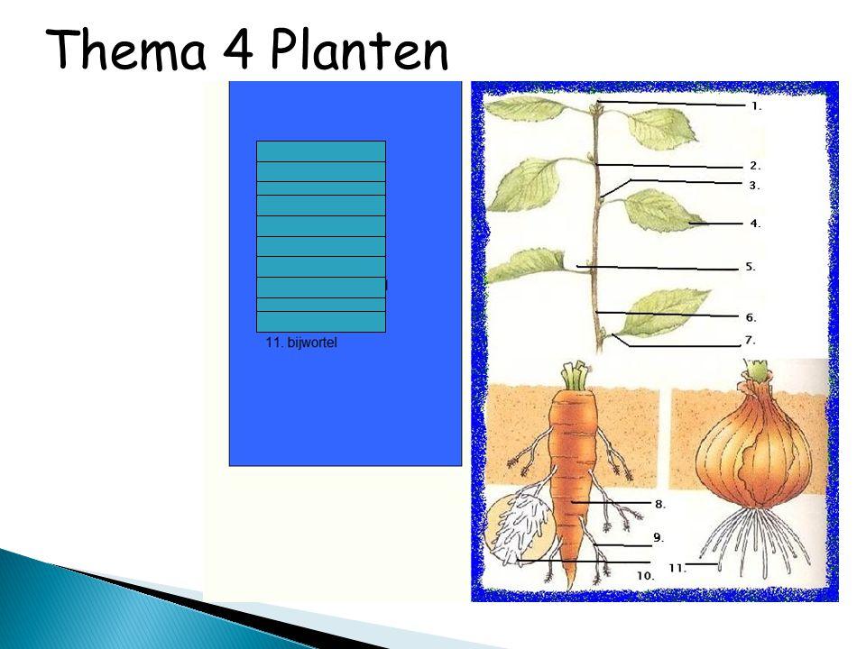 Thema 4 Planten