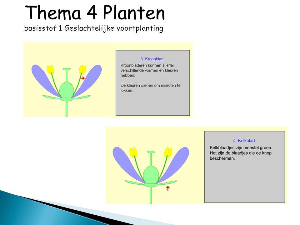 18.2 Bij verlichtingssterkte P is de zuurstofproductie in de twee typen bladeren niet gelijk.