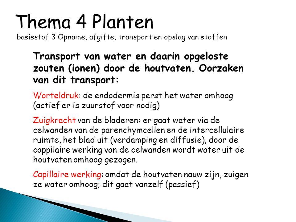 Thema 4 Planten basisstof 3 Opname, afgifte, transport en opslag van stoffen Transport van water en daarin opgeloste zouten (ionen) door de houtvaten.