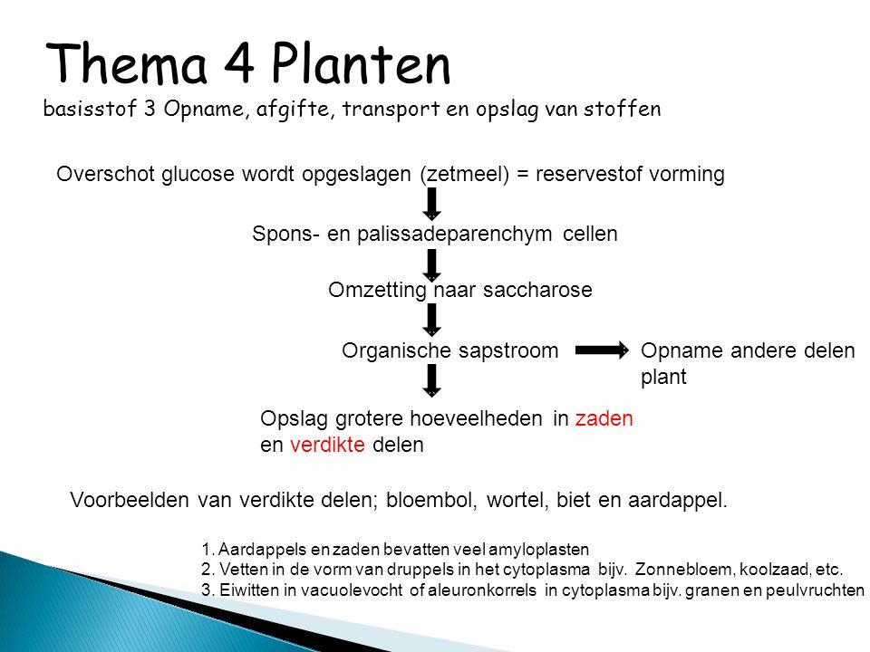 Thema 4 Planten basisstof 3 Opname, afgifte, transport en opslag van stoffen Overschot glucose wordt opgeslagen (zetmeel) = reservestof vorming Spons-