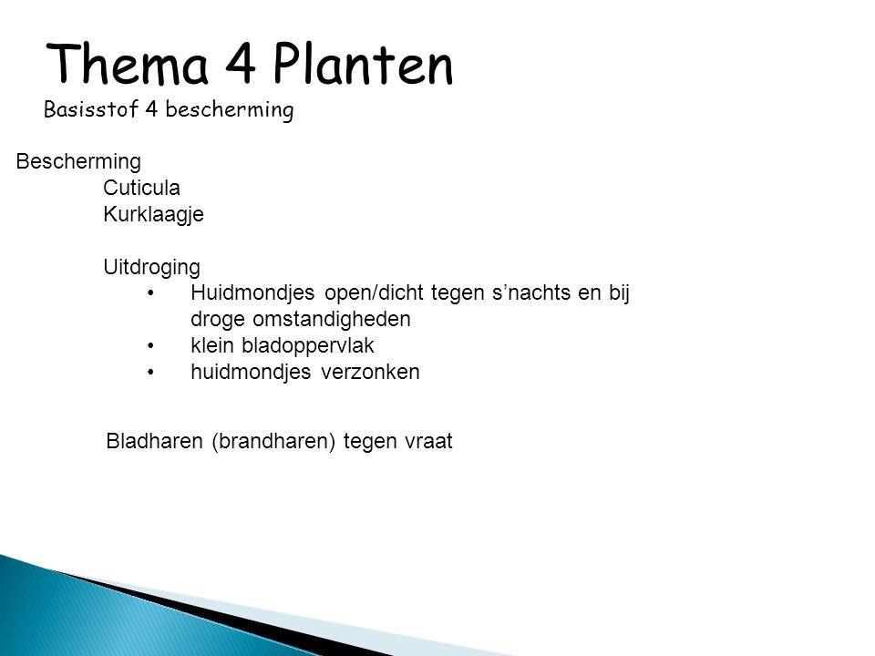 Thema 4 Planten Basisstof 4 bescherming Bescherming Cuticula Kurklaagje Uitdroging •Huidmondjes open/dicht tegen s'nachts en bij droge omstandigheden
