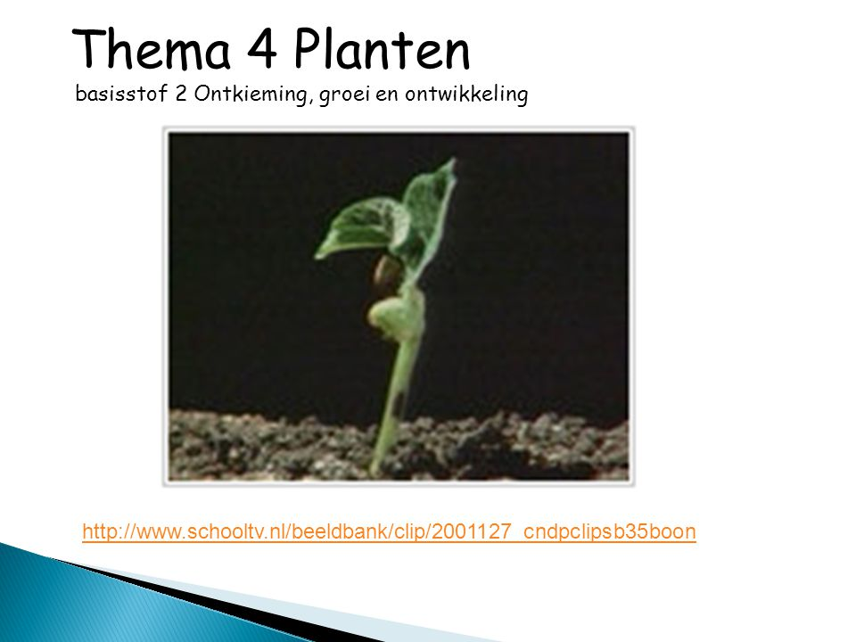 Thema 4 Planten basisstof 2 Ontkieming, groei en ontwikkeling http://www.schooltv.nl/beeldbank/clip/2001127_cndpclipsb35boon