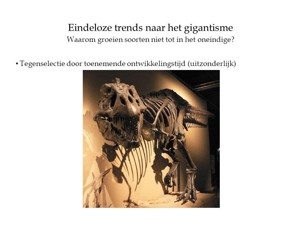 Eindeloze trends naar het gigantisme Waarom groeien soorten niet tot in het oneindige? • Tegenselectie door toenemende ontwikkelingstijd (uitzonderlij