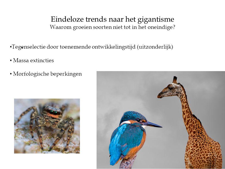 • • Tegenselectie door toenemende ontwikkelingstijd (uitzonderlijk) • Massa extincties • Morfologische beperkingen Waarom groeien soorten niet tot in