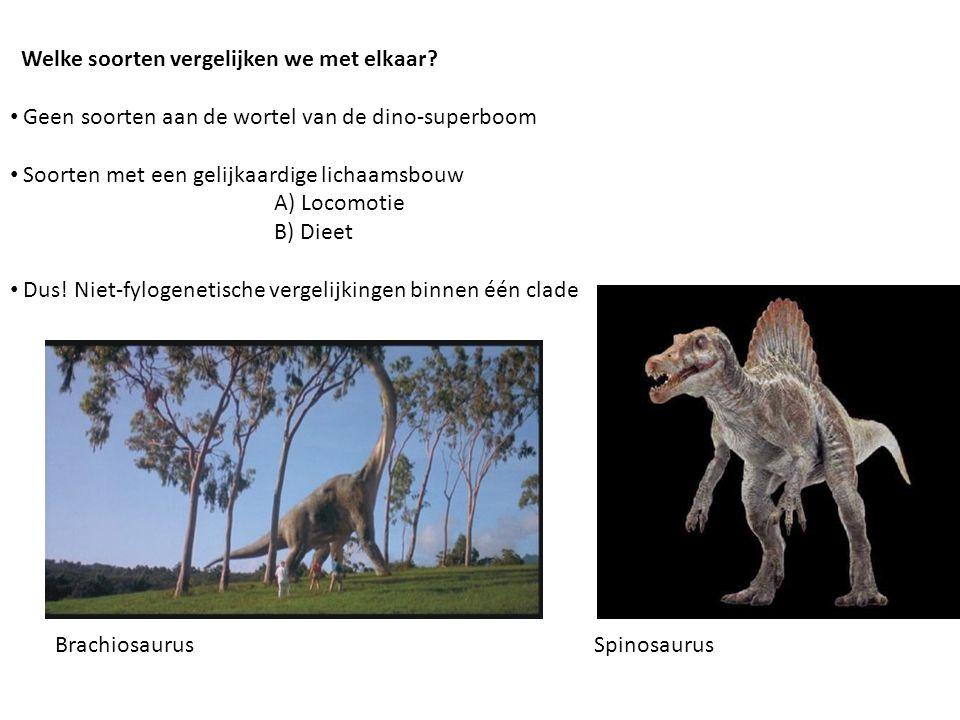 Welke soorten vergelijken we met elkaar? • Geen soorten aan de wortel van de dino-superboom • Soorten met een gelijkaardige lichaamsbouw A) Locomotie