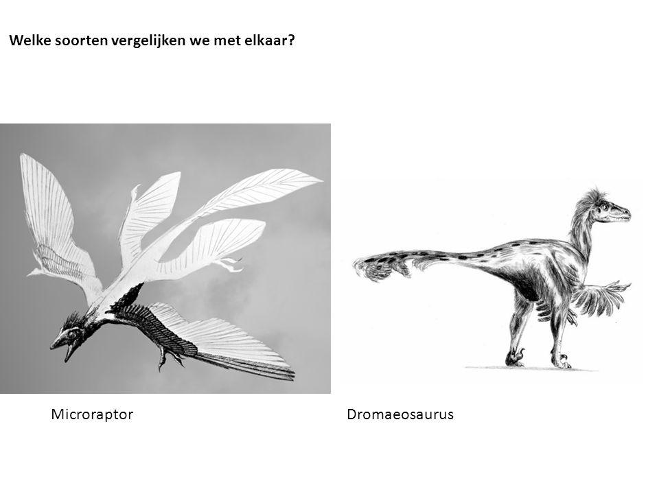 Microraptor Dromaeosaurus Welke soorten vergelijken we met elkaar?