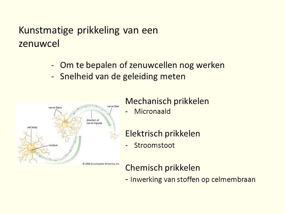 Kunstmatige prikkeling van een zenuwcel -Om te bepalen of zenuwcellen nog werken -Snelheid van de geleiding meten Mechanisch prikkelen -Micronaald Ele