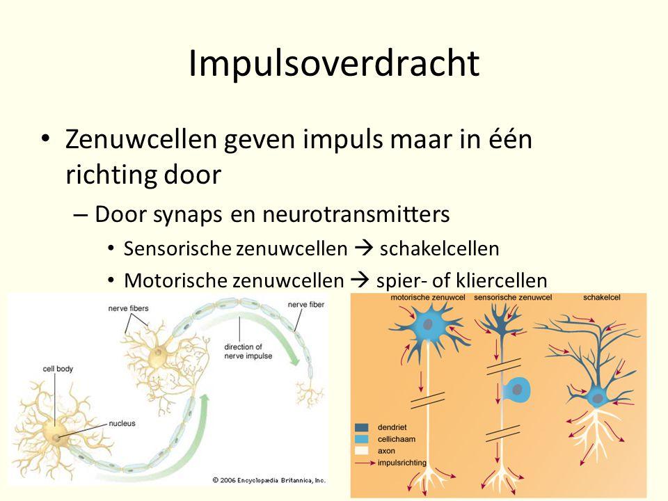 Impulsoverdracht • Zenuwcellen geven impuls maar in één richting door – Door synaps en neurotransmitters • Sensorische zenuwcellen  schakelcellen • M