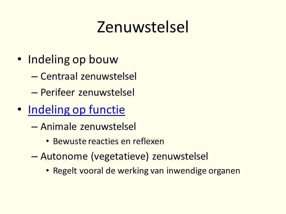 Zenuwstelsel • Indeling op bouw – Centraal zenuwstelsel – Perifeer zenuwstelsel • Indeling op functie Indeling op functie – Animale zenuwstelsel • Bew