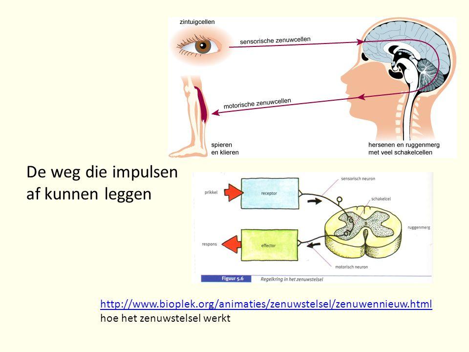 De weg die impulsen af kunnen leggen http://www.bioplek.org/animaties/zenuwstelsel/zenuwennieuw.html http://www.bioplek.org/animaties/zenuwstelsel/zen