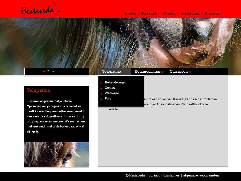 Behandelingen In een consult met jouw paard of een ander dier.
