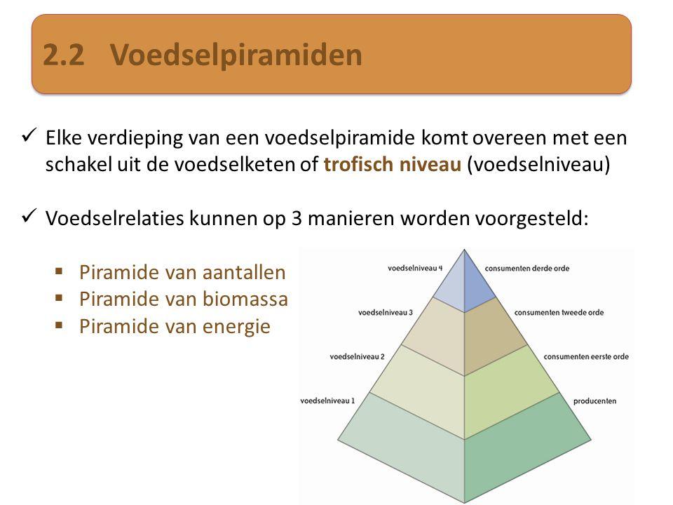 2.2Voedselpiramiden  Elke verdieping van een voedselpiramide komt overeen met een schakel uit de voedselketen of trofisch niveau (voedselniveau)  Vo