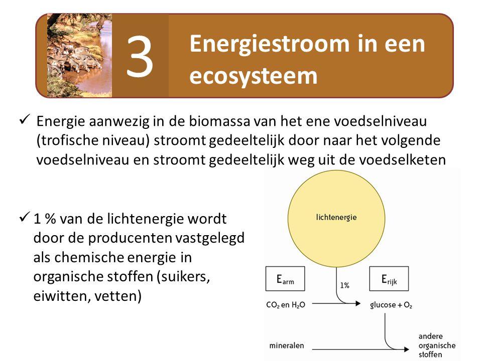 Energiestroom in een ecosysteem 3  Energie aanwezig in de biomassa van het ene voedselniveau (trofische niveau) stroomt gedeeltelijk door naar het vo