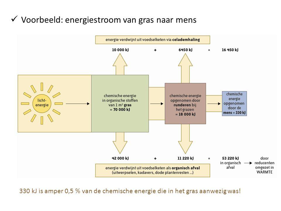  Voorbeeld: energiestroom van gras naar mens 330 kJ is amper 0,5 % van de chemische energie die in het gras aanwezig was!