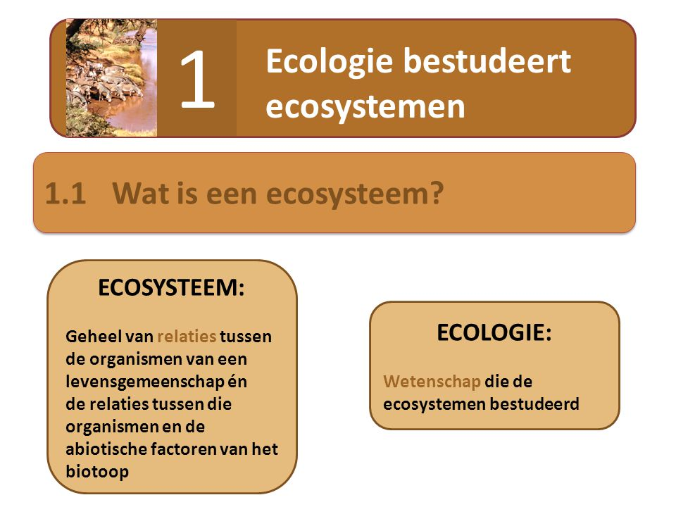 kwalpoliephazelmuis Ecologie bestudeert ecosystemen 1 1.1Wat is een ecosysteem? ECOLOGIE: Wetenschap die de ecosystemen bestudeerd ECOSYSTEEM: Geheel