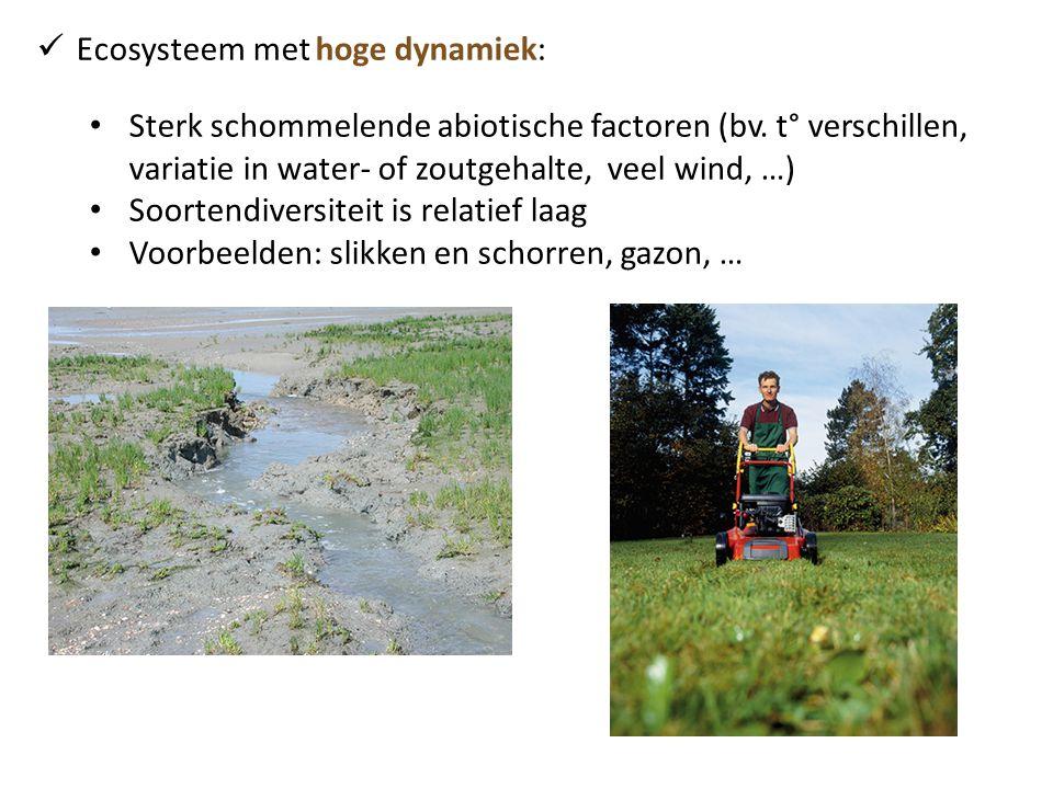  Ecosysteem met hoge dynamiek: • Sterk schommelende abiotische factoren (bv. t° verschillen, variatie in water- of zoutgehalte, veel wind, …) • Soort