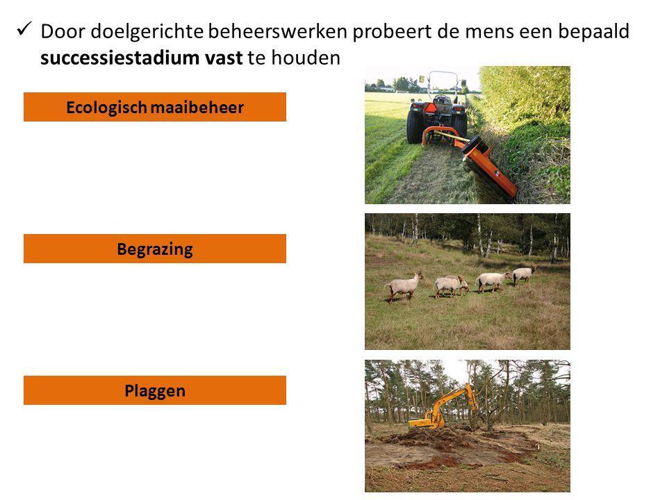 Ecologisch maaibeheer Begrazing Plaggen  Door doelgerichte beheerswerken probeert de mens een bepaald successiestadium vast te houden