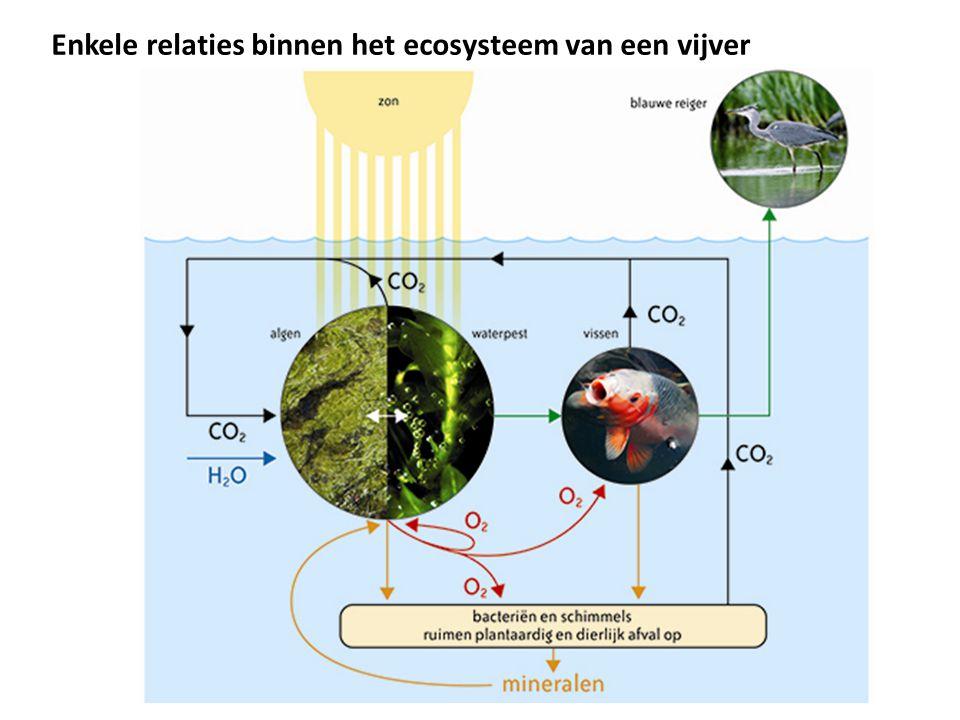 Energiestroom in een ecosysteem 3  Energie aanwezig in de biomassa van het ene voedselniveau (trofische niveau) stroomt gedeeltelijk door naar het volgende voedselniveau en stroomt gedeeltelijk weg uit de voedselketen  1 % van de lichtenergie wordt door de producenten vastgelegd als chemische energie in organische stoffen (suikers, eiwitten, vetten)
