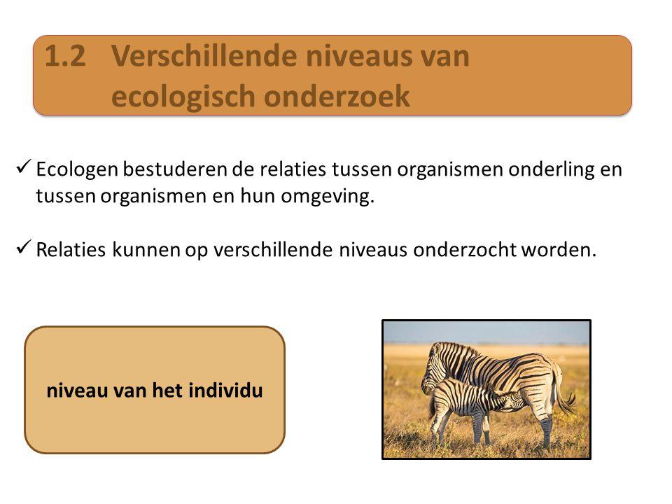 1.2Verschillende niveaus van ecologisch onderzoek  Ecologen bestuderen de relaties tussen organismen onderling en tussen organismen en hun omgeving.