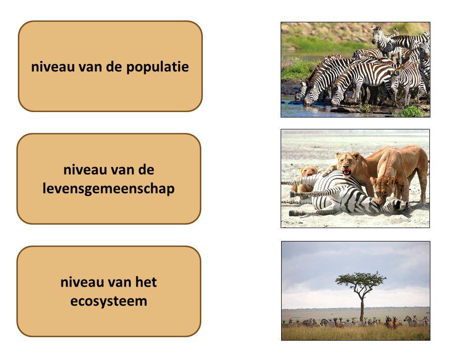 niveau van de levensgemeenschap niveau van het ecosysteem niveau van de populatie