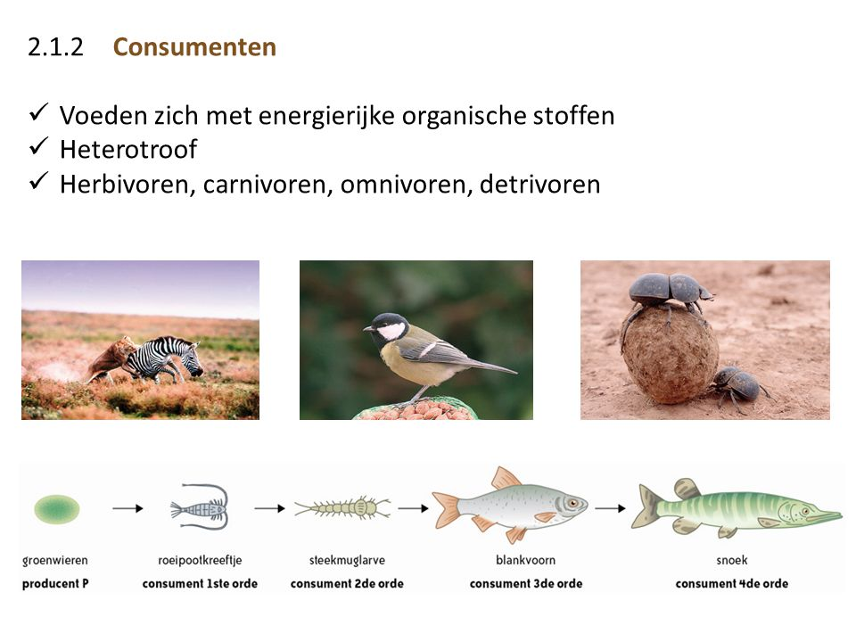 2.1.2Consumenten  Voeden zich met energierijke organische stoffen  Heterotroof  Herbivoren, carnivoren, omnivoren, detrivoren