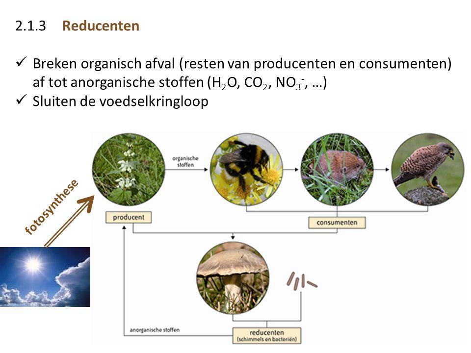 2.1.3Reducenten  Breken organisch afval (resten van producenten en consumenten) af tot anorganische stoffen (H 2 O, CO 2, NO 3 -, …)  Sluiten de voe