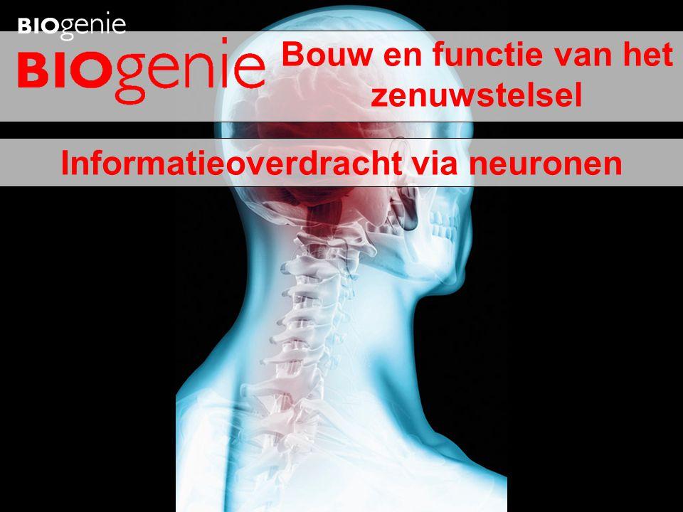 Informatieoverdracht via neuronen Bouw en functie van het zenuwstelsel