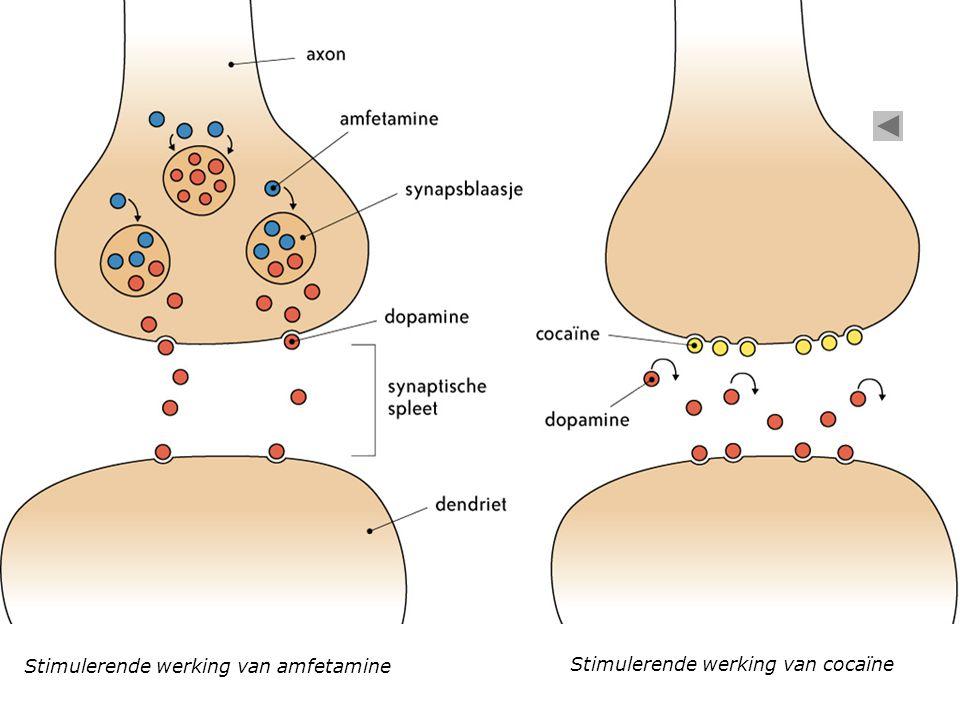 Stimulerende werking van amfetamine Stimulerende werking van cocaïne