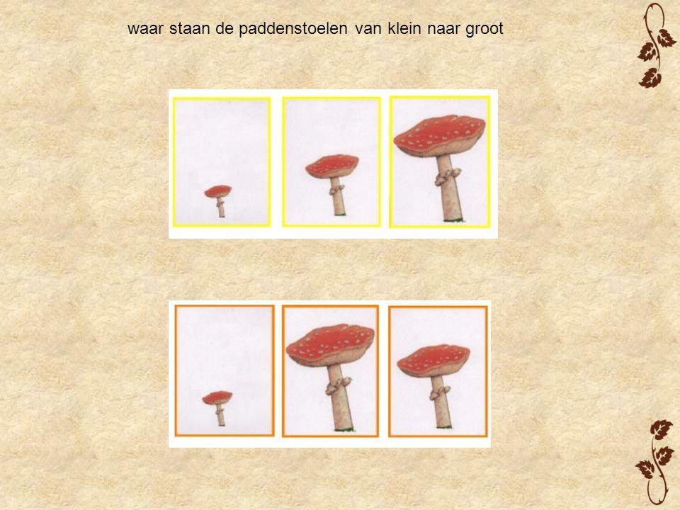 waar staan de paddenstoelen van klein naar groot