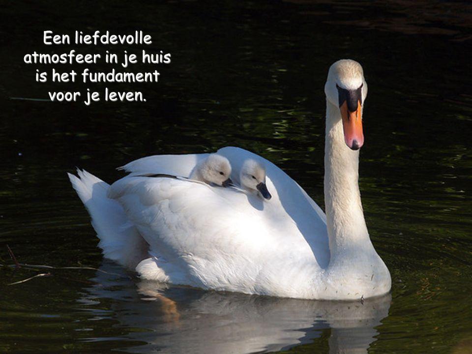 Leef een goed, eerbaar leven. Dan, wanneer je ouder wordt, en terugdenkt, zul je in staat zijn om er een tweede keer van te genieten.