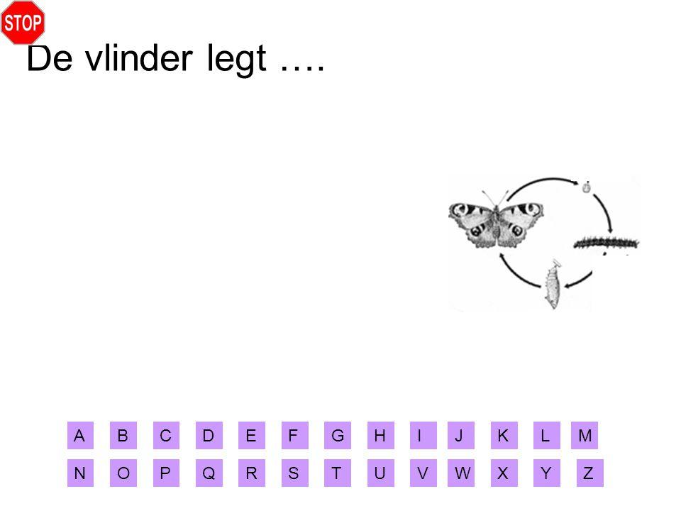 De vlinder legt …. ABCDEFGHIJ XYZ MLK RSTUVWNOPQ