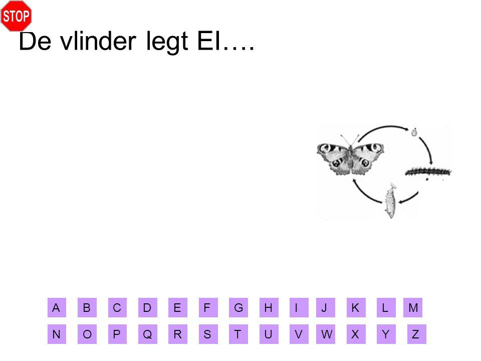 De vlinder legt EI…. ABCDEFGHIJ XYZ MLK RSTUVWNOPQ