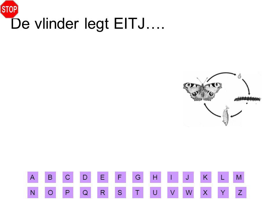 De vlinder legt EITJ…. ABCDEFGHIJ XYZ MLK RSTUVWNOPQ